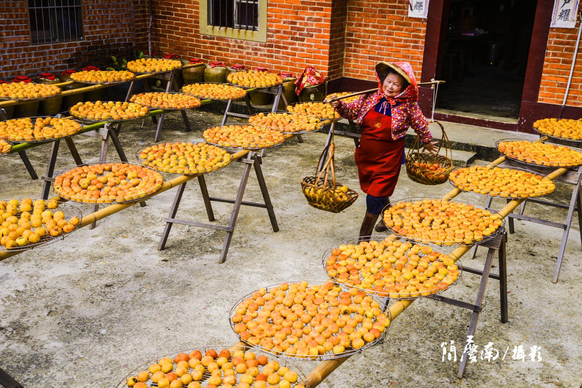 台灣.新竹|秋天必拍新埔的曬柿餅 你知道他是怎麼被發現的嗎?